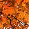 11月。それは好きなブログを告白する月。ぼくの好きなブログを紹介します!