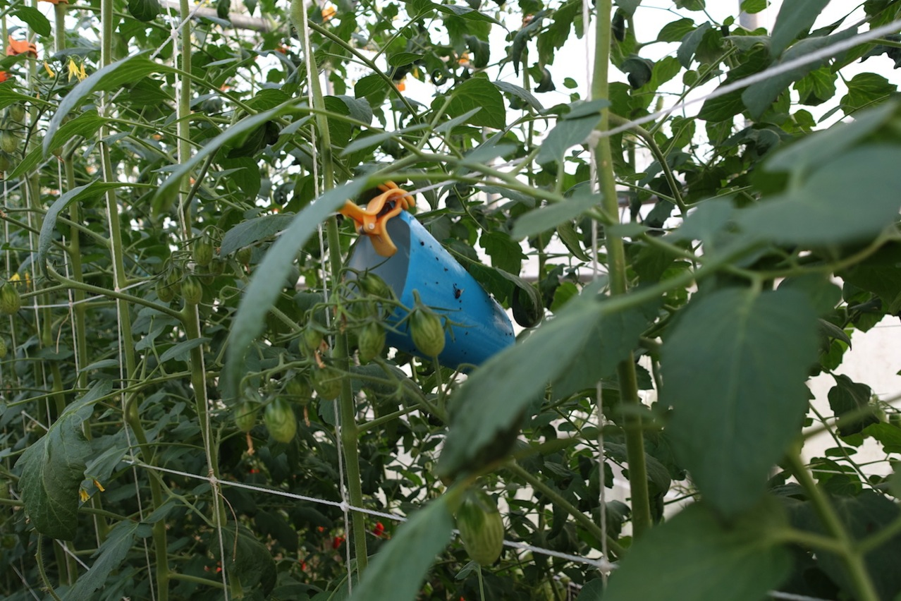 Tainan organic farm 0063