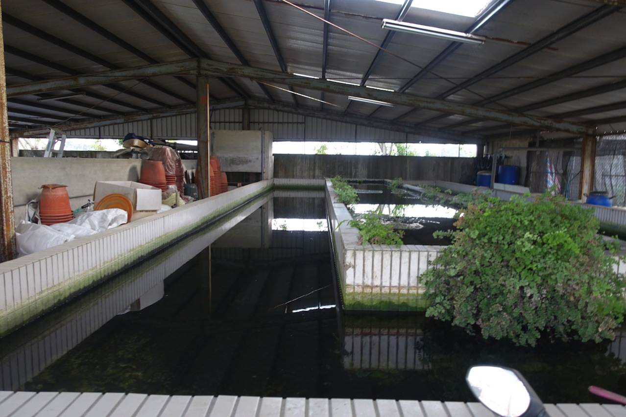Tainan organic farm 0091