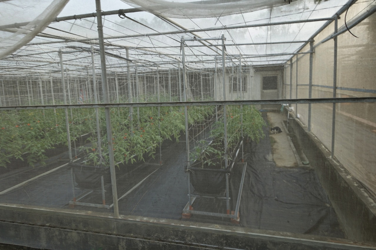 Tainan organic farm 0093