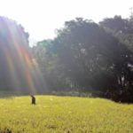 鎌を持って自分の手で稲を刈ってみませんか?10月22日(土)、23日(日)に第3回淡路島稲作ワークショップを共同開催します!