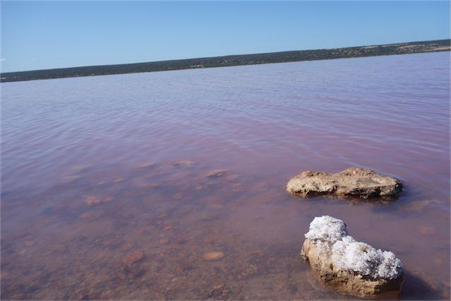 Pink lake 17