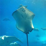 あのマンタのマンちゃんが推す!!これでアナタも美ら海マスター!!美ら海水族館パーフェクトガイド!!