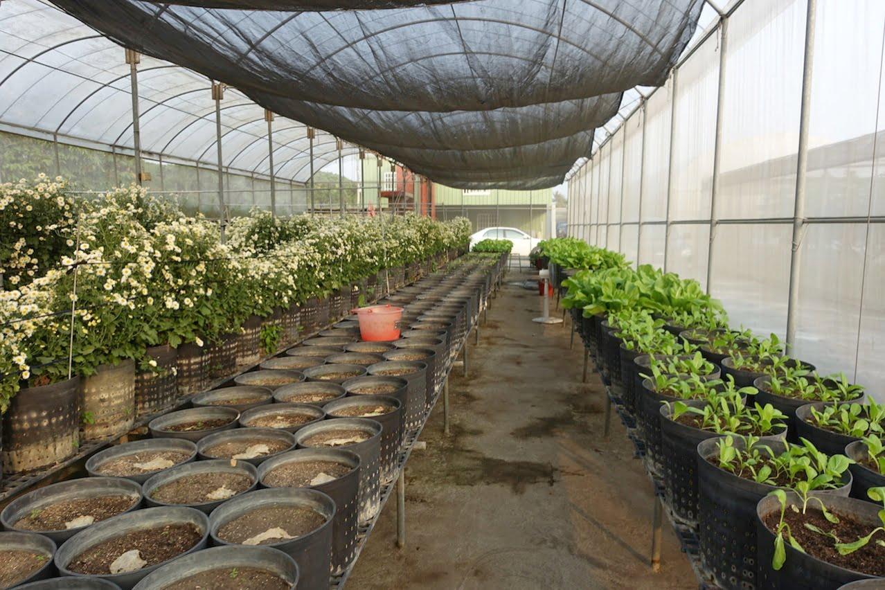 Tainan organic farm 0038