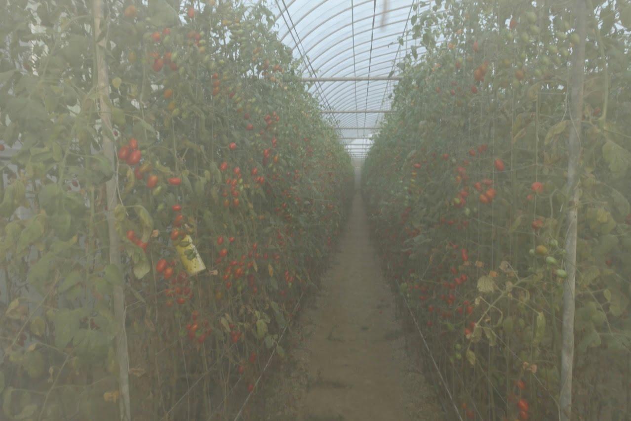 Tainan organic farm 0054