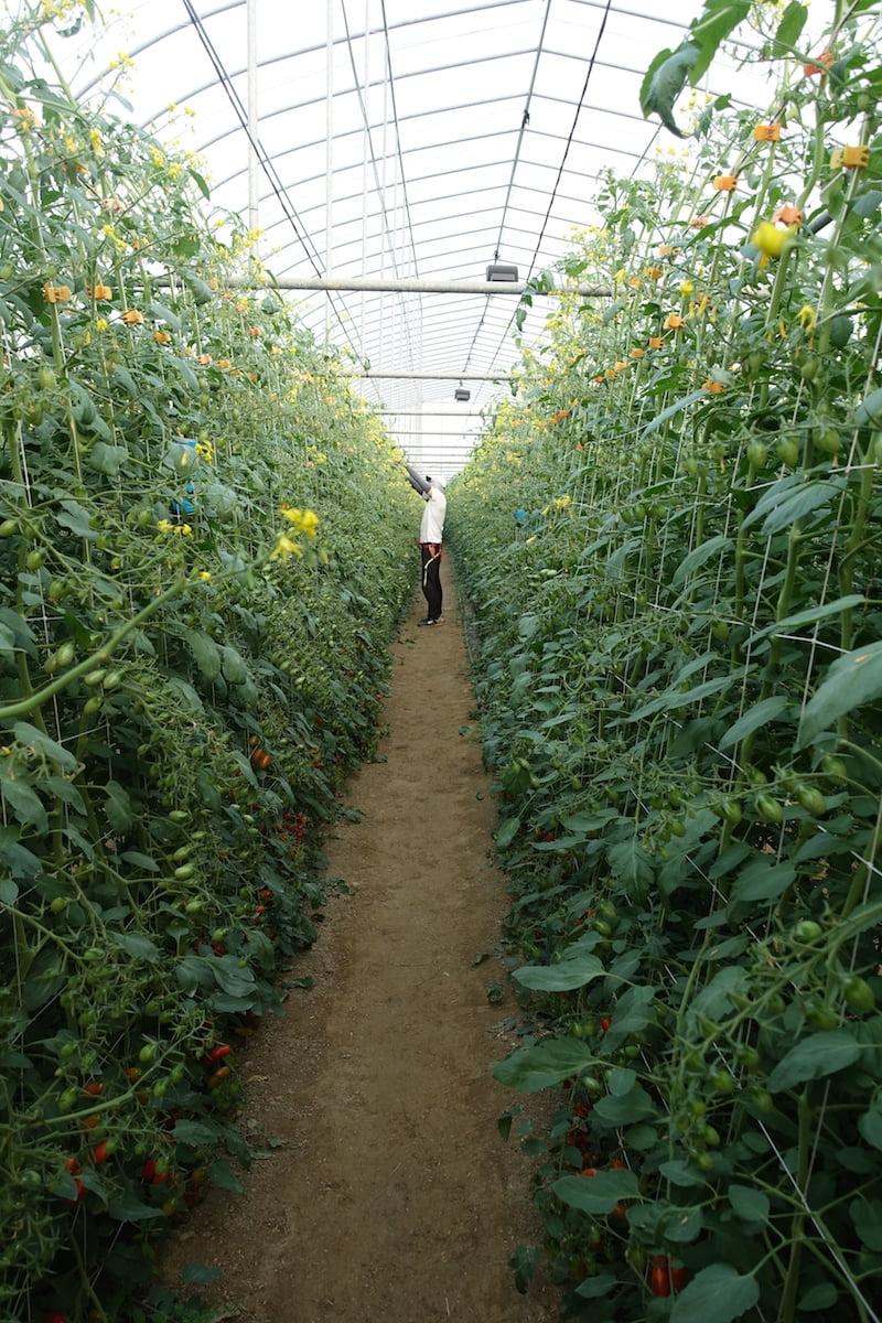 Tainan organic farm 0058