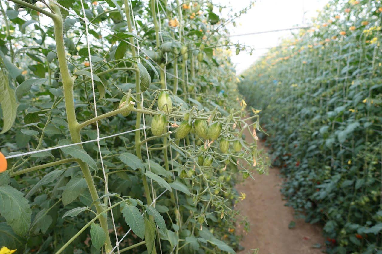 Tainan organic farm 0059