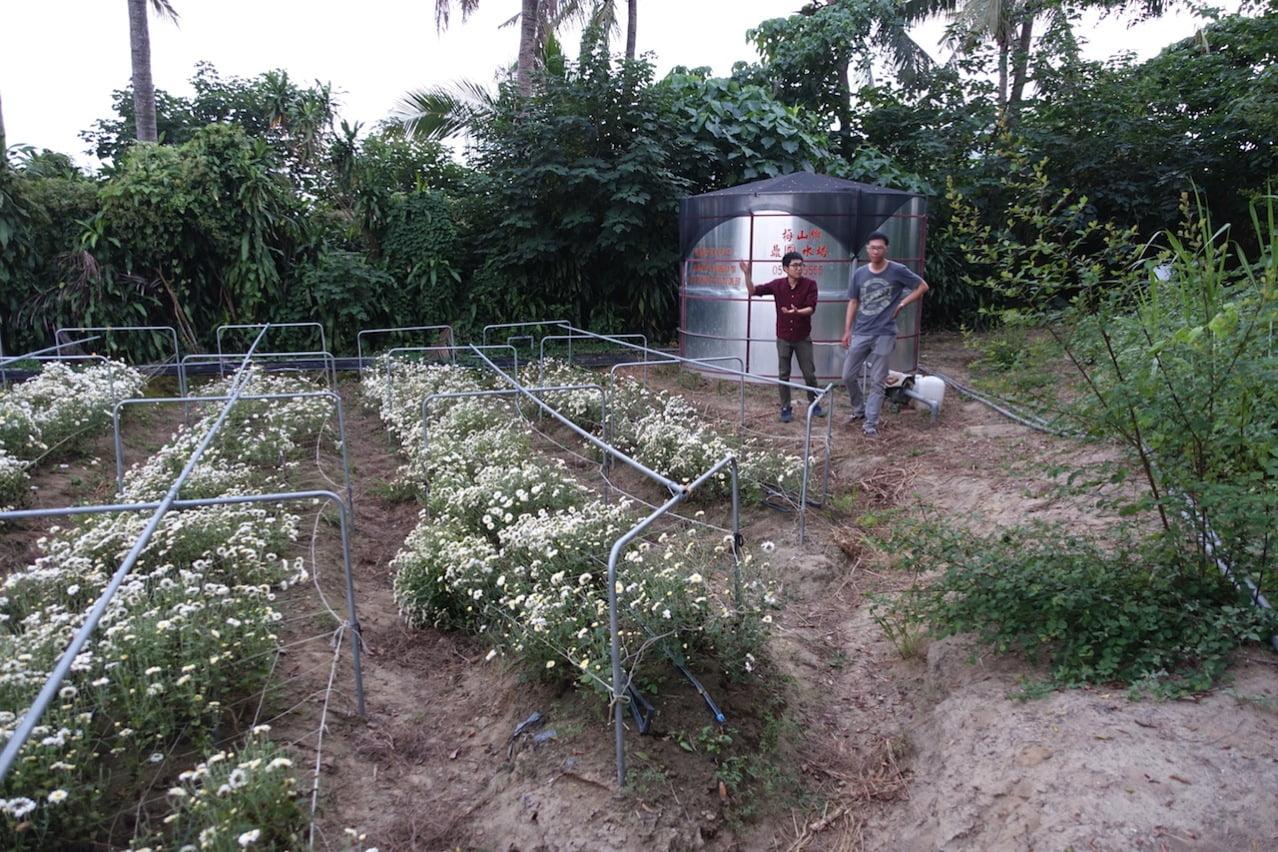 Tainan organic farm 0154