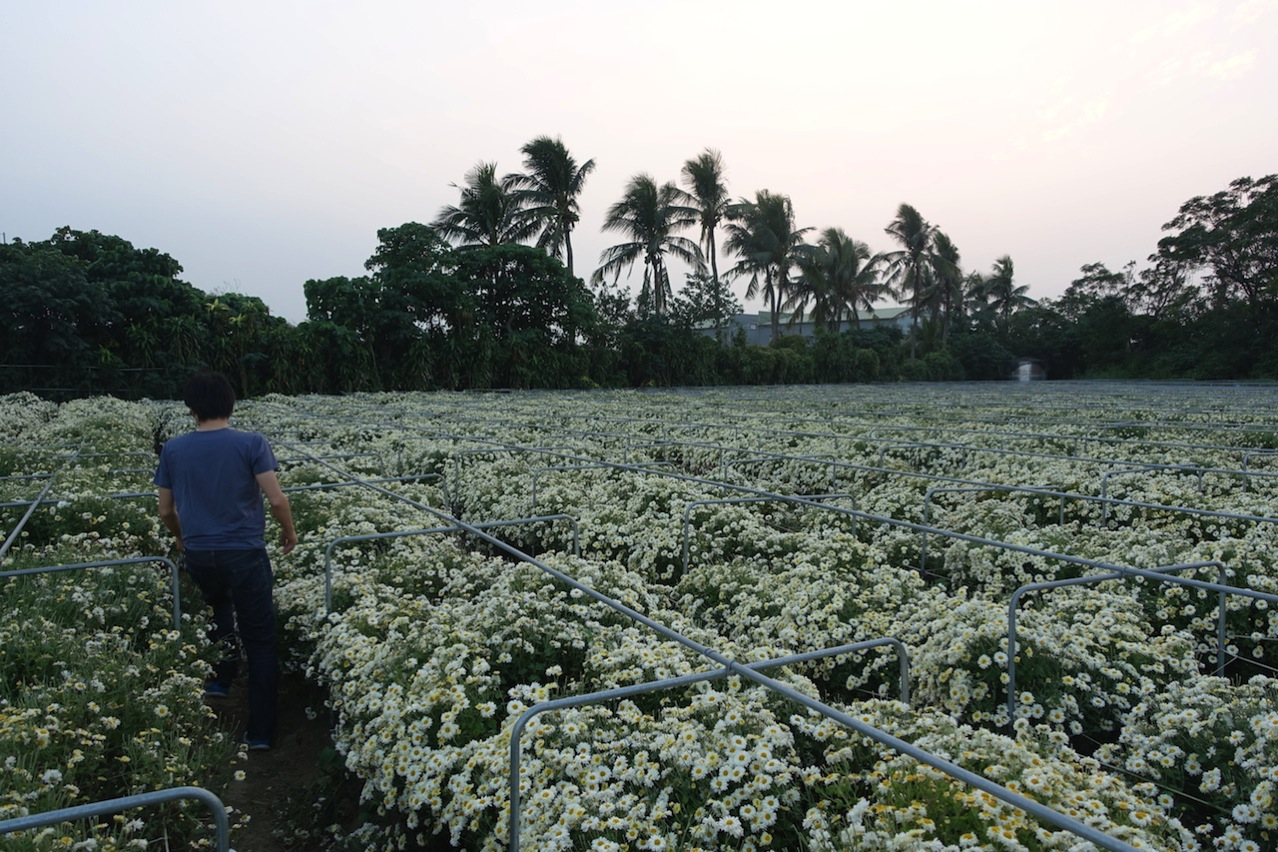Tainan organic farm 0136