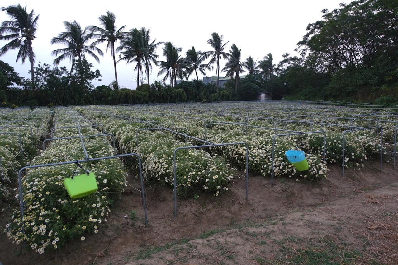 Tainan organic farm 0155